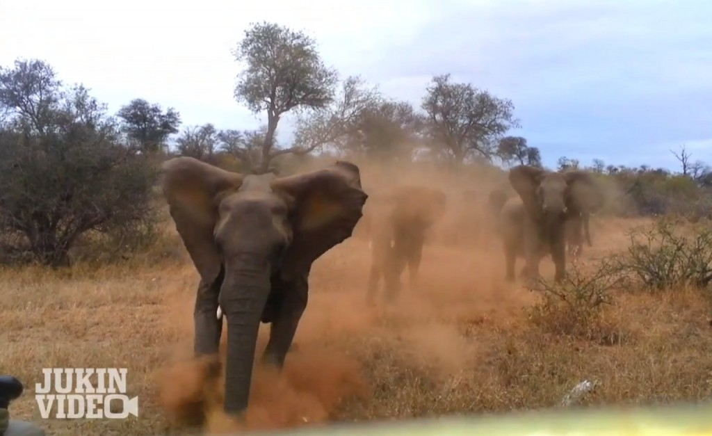 Elephant Attacks Safari Jeep (Viral Video)
