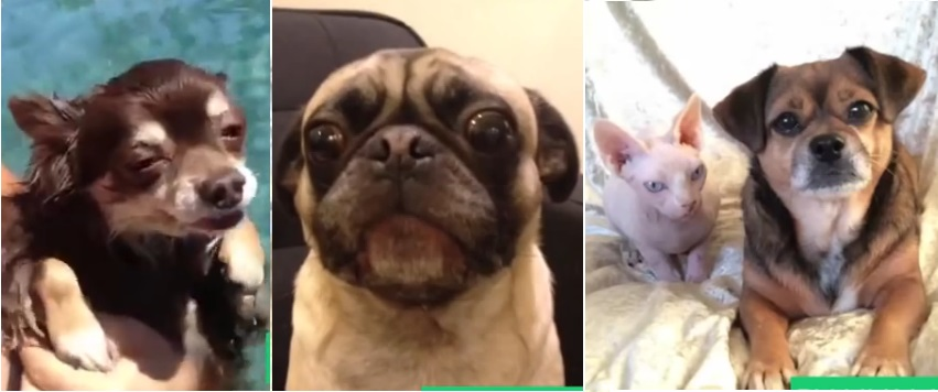 Watch: The Best Dog Vines of 2013 (And Gifs)