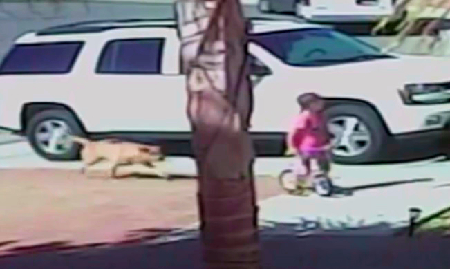 Incredible Video Shows Hero Kitty Saving Toddler's Life During Vicious Dog Attack