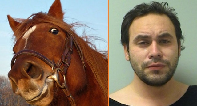 sex with horse porn